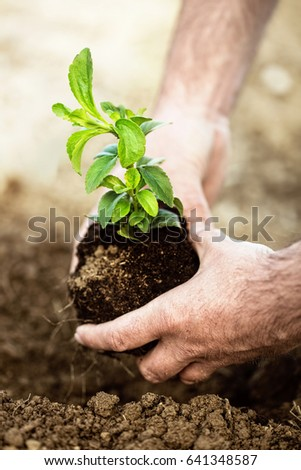Planting new life. Male hands holding new born plant and putting it to soil.