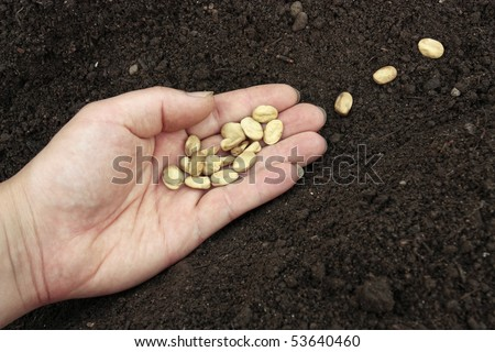Planting of vegetable seeds in prepared soil rows - stock photo