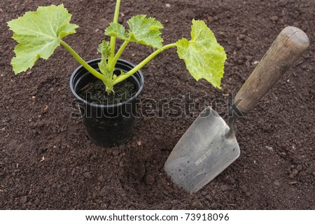 Planting of vegetable seeds in prepared soil rows