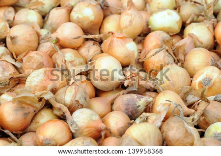 planting onion for background uses