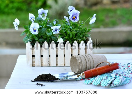 Planting pansies - stock photo