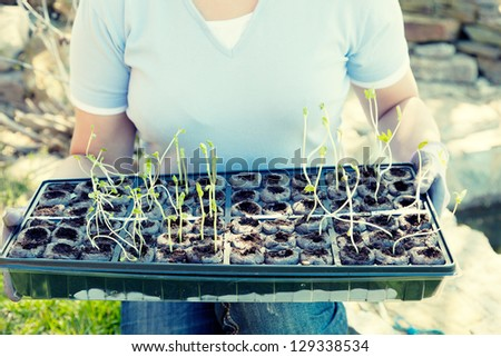 Planting season - stock photo