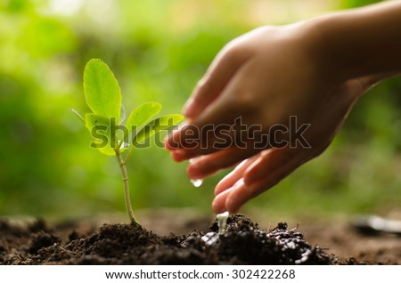 Planting,Seeding,Seedling, Close up Kid hand planting and watering young tree over green background - stock photo