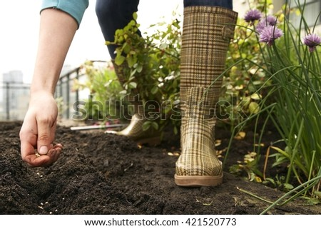 Planting seeds in the spring