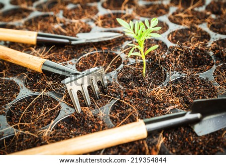 planting small tree in garden