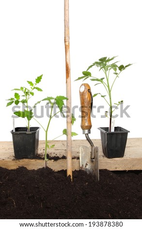 Planting tomato plants, plants in soil and wooden board with a cane and garden trowel