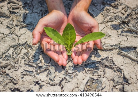 Planting trees to mitigate drought.