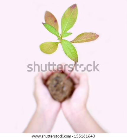 Planting trees to save the world. - stock photo