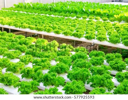 Planting Vegetable Garden Green Vegetable Rows Stock Photo (Royalty ...