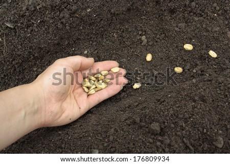 Planting vegetable seeds in prepared soil - stock photo