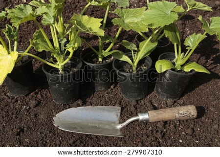 Planting vegetable seeds in prepared soil