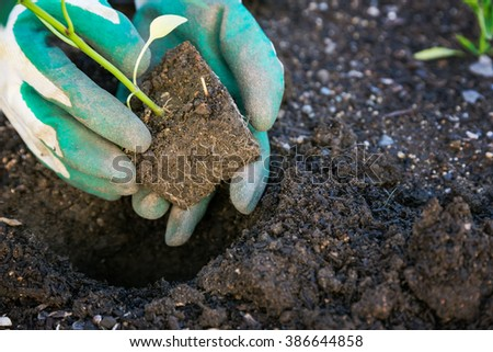 Planting vegetables in the garden - stock photo