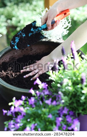 Planting, work on the plot. Female plants in pot plants forming a beautiful composition flower - stock photo