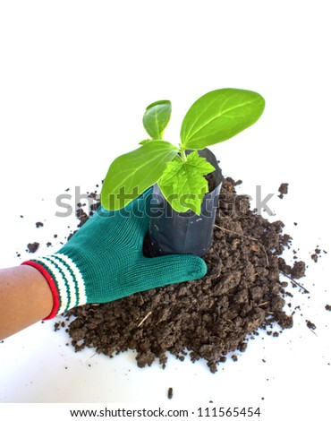 Planting young plant  in the soil on white - stock photo