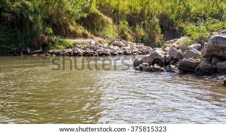 Plants and bushes growing along the banks of the Jordan River, Israel