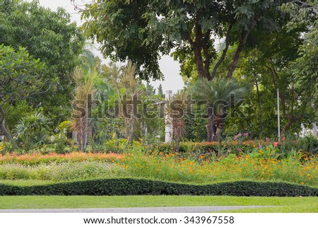 Plants and flower decorate in garden.