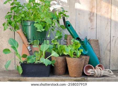 Plants And Gardening Accessories With Tools On Wooden Background