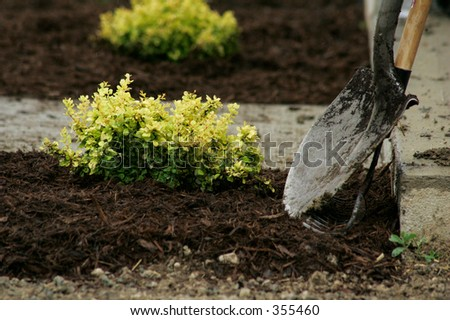 Plants and Landscaping Tools - stock photo