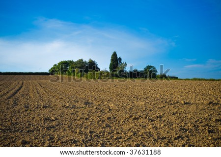 Plants and soil in a field