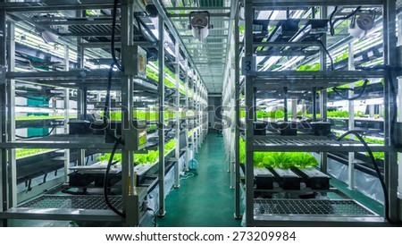 Plants are cultivated in hydroponic system