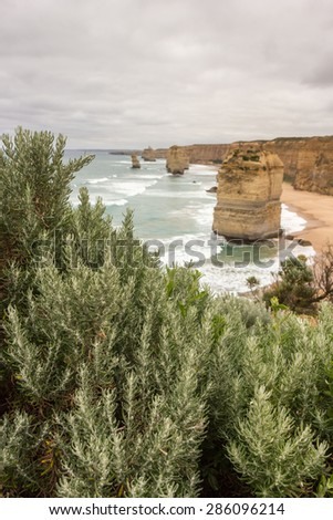 Plants at The Twelve Apostles in Summer, Port Campbell National Park, Great Ocean Road in Victoria, Australia - stock photo