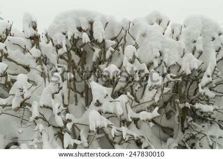 Plants covered in snow in winter - stock photo