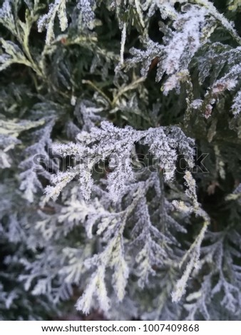 Plants covered with ice crystals (rime)