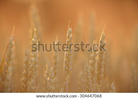 plants for natural background, nature series - stock photo