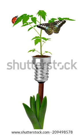 plants growing from bulbs  - stock photo