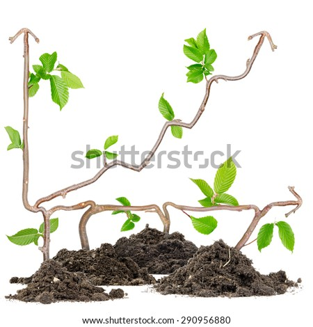 Plants growing from soil heaps forming graph with arrow pointing upwards - stock photo