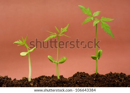 Plants growing from soil-Plant progress - stock photo