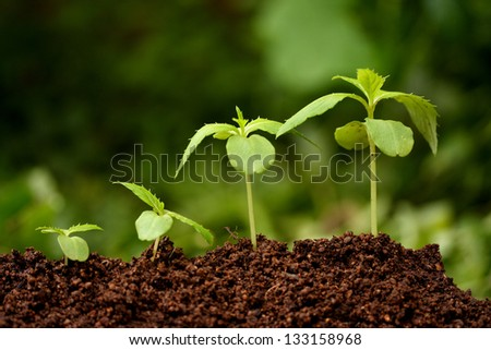Plants growing from soil-Plant progress