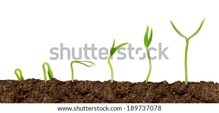 Plants growing from soil-Plant progress isolated over white - stock photo