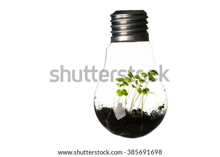 plants growing in light bulb isolated on white background