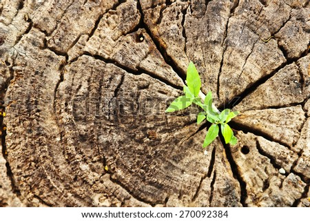 Plants growing on a stump - stock photo
