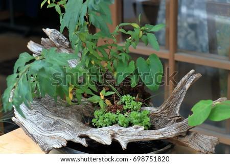 Plants Driftwood Vase Stock Photo Royalty Free 698751820