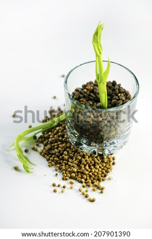 Plants in glass with a white background. - stock photo