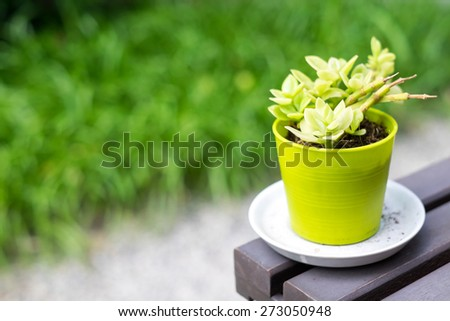 Plants in pots green on wooden table - stock photo