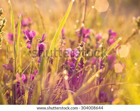 Plants in sunrise - stock photo