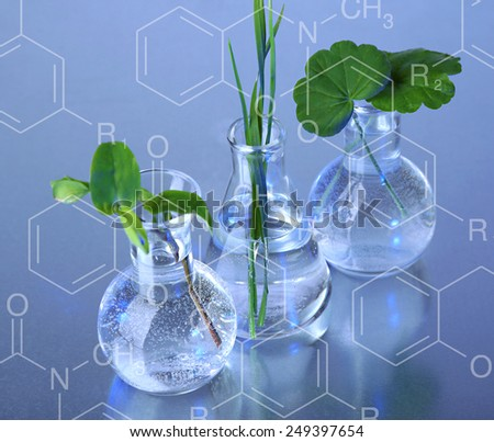 Plants in test tubes, on blue background - stock photo