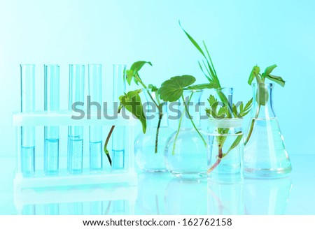 Plants in test tubes, on color background
