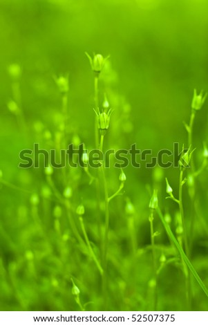 Plants in the garden closeup; background blurred #4 - stock photo
