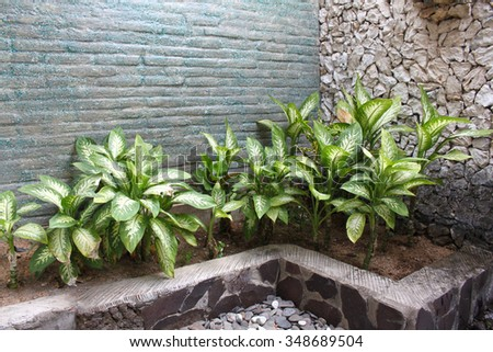 Plants in the interior of the bathroom, Bali, Indonesia