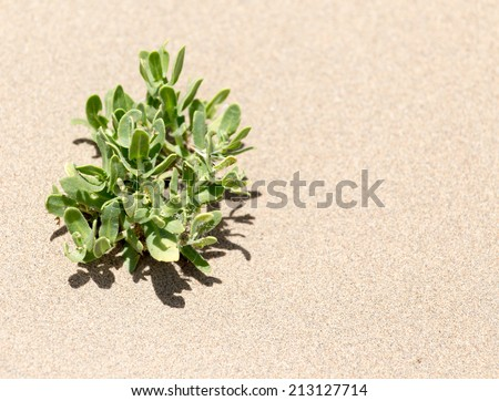 plants in the sand in the desert - stock photo