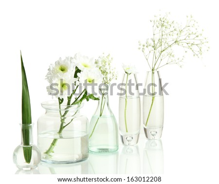 Plants in various glass containers isolated on white - stock photo