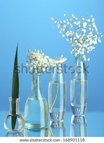 Plants in various glass containers on blue background - stock photo