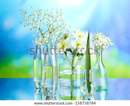 Plants in various glass containers on natural background - stock photo