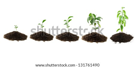 plants lemon green and soil - stock photo