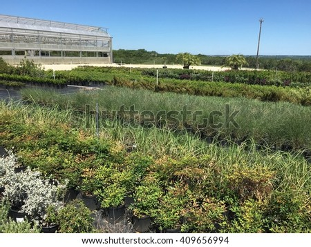 Plants lined up in rows at a nursery, with greenhouse in background. - stock photo