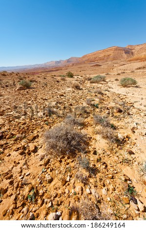 Plants of the Negev Desert in Israel